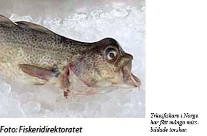 Missbildad norsk torsk