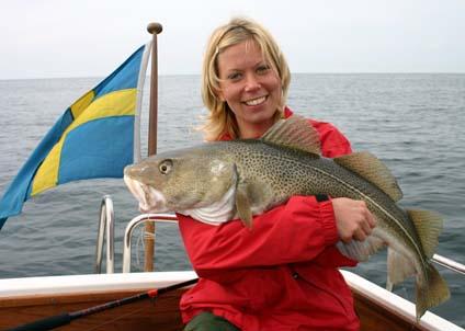 Kan naturen hjälpa oss att återfå det fina torskfisket inne i fjordarna? (Foto: Svante Brodin)