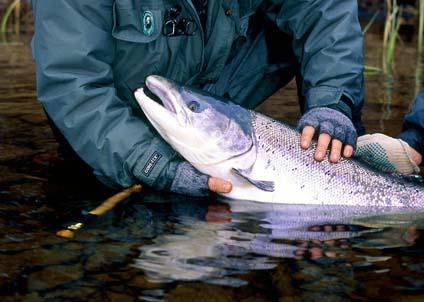 Avtalet om laxfisket i gränsområdet får hård kritik av norska sportfiskare. (Foto: Martin Falklind)