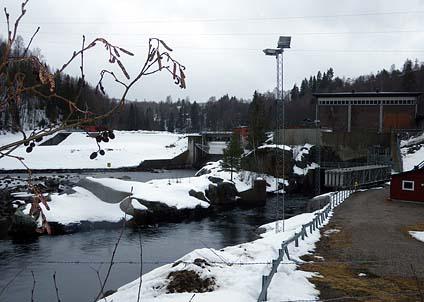Här i Viforsen i Ljungan har Statkraft sänkt vattennivån så mycket att det riskerar laxrommen i älven.
