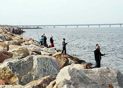 Med Öresundsbron i fonden och massor av horngäddor i vattnet njuter deltagarna i 2009 års tävling av vårsolen i Limhamn.