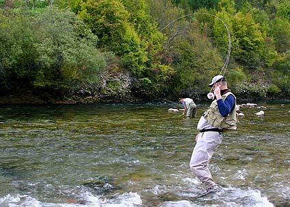 Ginklara strömmar rinner fram i natursköna omgivningar och rätt vad det är hugger drömfisken i Bosnien.