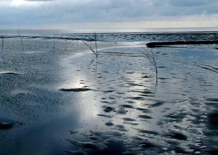 Den danska regeringen vill göra nationalpark av det grunda och näringsrika Vadehavet.