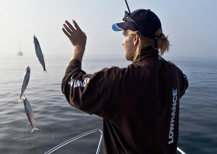sill, sillfiske, höstsill, havsfiske, Anders Nicander