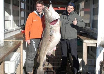 Världsrekord för torsk