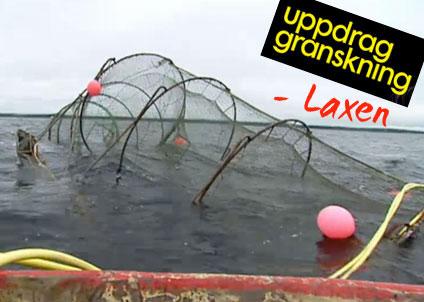 dioxin i lax från östersjön