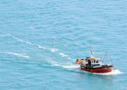 EU-ministrarna svek torsk och lax - igen