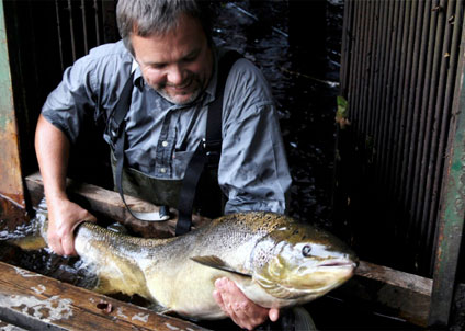 Fiskevårdaren Bernt Moberg med lax från Testeboån, ett av landets minsta bestånd. (Foto: Simon Moberg)