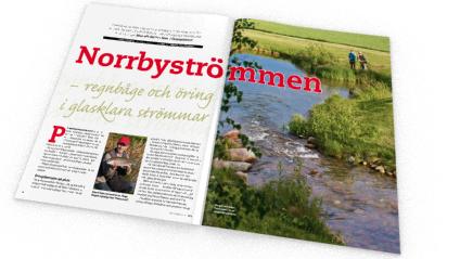 Missa inte artikeln om Norrbyströmmen i Fiskejournalen nummer 12.