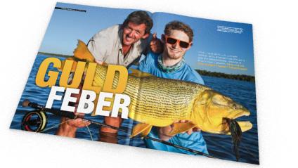 Artikelförfattaren med en stor golden dorado. Men de kan bli större, mycket större… Det största exemplaret från Paranáfloden vägde 33 kilo och gäller som IGFA-världsrekord.