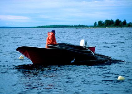 Det är förbjudet att sälja eller saluföra fritidsfiskad lax sedan maj 2011, då riksdagen fattade beslut i frågan.