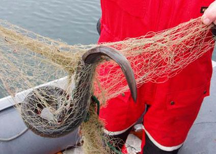 Kustbevakningen beslagtar redskap vid olagligt ålfiske. (Foto: Kustbevakningen)