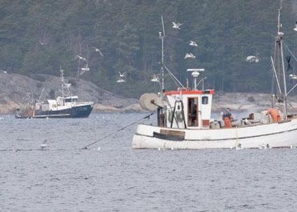 Från och med 1 januari 2015 gäller landningsskyldighet för flera arter i Östersjön, exempelvis sill, torsk och lax . Under perioden 2016-2019 införs landningsskyldigheten stegvis för exempelvis torsk, vitling, kolja, gråsej och havskräfta i Västerhavet.