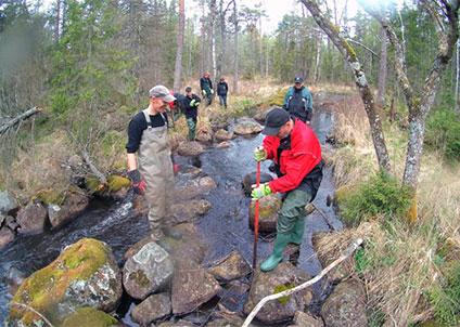 Biotopvård i ett öringsvattendrag i Kronoberg. (Foto: Jakob Marktorp)