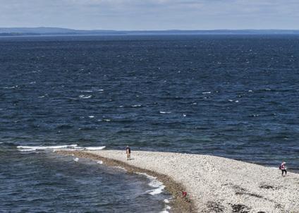 Beror fiskdöd och brunt vatten på utsläpp, eller vad händer i Hanöbkten? Foto: Hasse Dahlgren/Azote