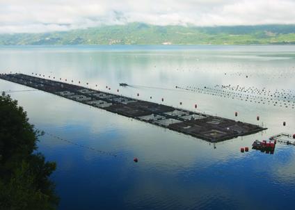 Norsk laxodling har intressen både längs de sydamerikanska och nordamerkanska kusterna.