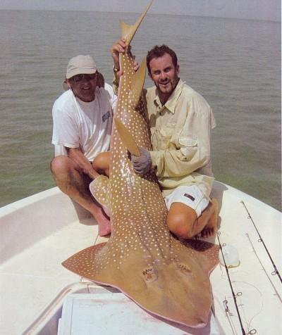 Den sällsynta gitarrfisken är en slags rocka. Detta exemplar vägde 56 982 gram.