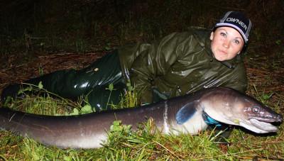 Hela ålen i sin fulla prakt. Den var 185 centimeter lång och mätte 56 cm runt midjan.