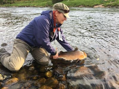 Alla fiskar återutsätts i River Dee. Det gör att det fortfarande finns gott om lax. I år har det fångats och återutsatts cirka 3000 fiskar. Foto: Tina Kraft