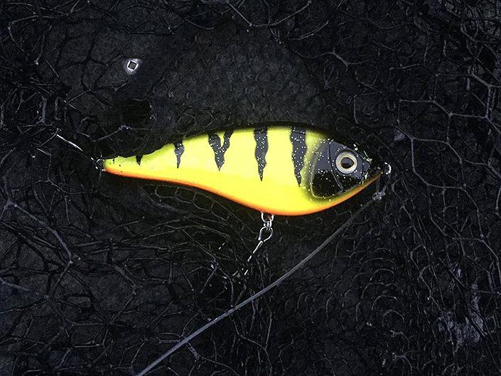 Här är betet som monstergäddan inhalerade- Ett Westin Swim i nya färgen Fire Perch.